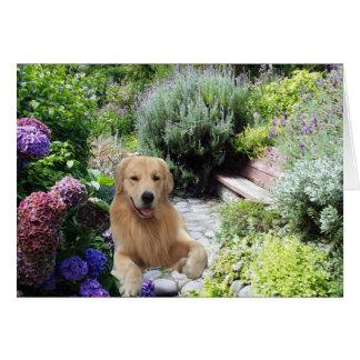 Golden Retrievers Caine In The Garden Card