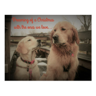 Golden Retrievers - Dreaming Christmas Postcard