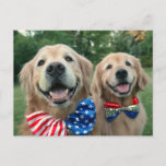 Golden Retrievers in Independence Day Bow Ties Postcard