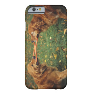 Golden Retrievers playing tug-of-war with toy in Barely There iPhone 6 Case