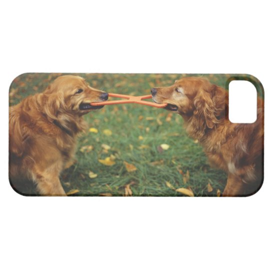 Golden Retrievers playing tug-of-war with toy in iPhone SE/5/5s Case