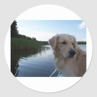Golden_retriver_6.png Classic Round Sticker