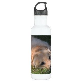 Golden Retriver Resting in the Grass Photo Water Bottle