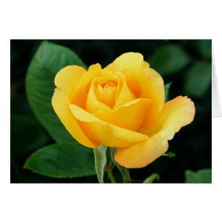Golden Rose 23 Card