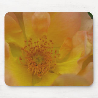 Golden Rose Mouse Pad