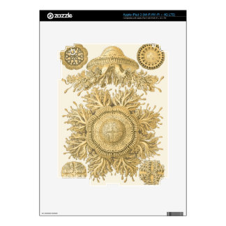 Golden Sea Creatures iPad 3 Decal