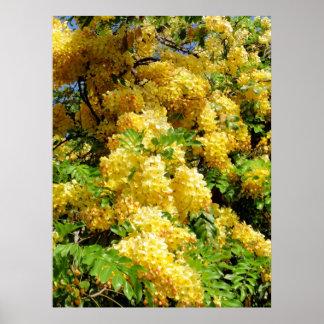 Golden Shower Tree Poster
