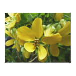 Golden Shower Tree Tropical Yellow Flowers Canvas Print