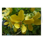 Golden Shower Tree Tropical Yellow Flowers Card