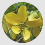 Golden Shower Tree Tropical Yellow Flowers Classic Round Sticker