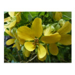 Golden Shower Tree Tropical Yellow Flowers Postcard