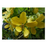Golden Shower Tree Tropical Yellow Flowers Poster