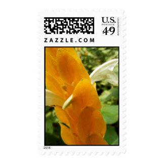 Golden Shrimp Plant Flower Postage Stamp