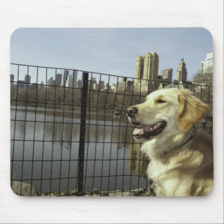 Golden Skyline by The Lake mousepad