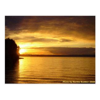 Golden Splash Postcards