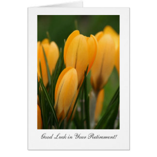 Golden Spring Crocuses - Luck in Your Retirement Greeting Cards