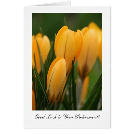 Golden Spring Crocuses - Luck in Your Retirement Card