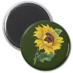 Golden Sunflower Fridge Magnet