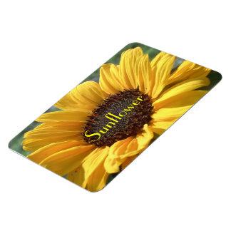 Golden Sunflower Magnet