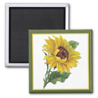 Golden Sunflower Magnets