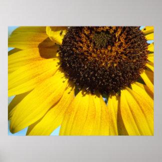 Golden Sunflower Poster Print