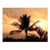 Golden Sunset Tropical Postcard