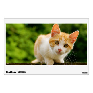Golden Tabby and White Kitten Wall Graphics