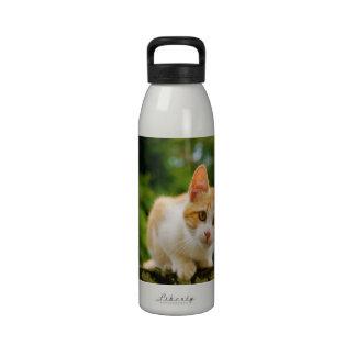 Golden Tabby and White Kitten Drinking Bottle