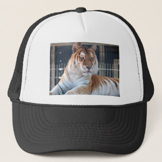 Golden Tabby  tiger at Cougar Mountain Zoo 1 Trucker Hat