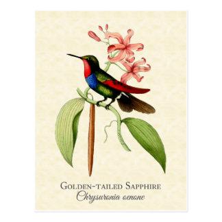 Golden Tailed Sapphire Hummingbird Art Postcard