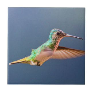 Golden Tailed Sapphire Hummingbird in Flight Tile