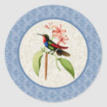 Golden Tailed Sapphire Hummingbird Stickers