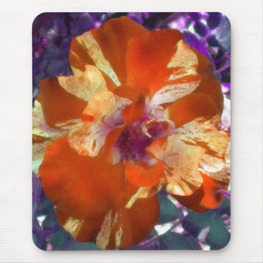 Golden Tangerine Rose mouse pad
