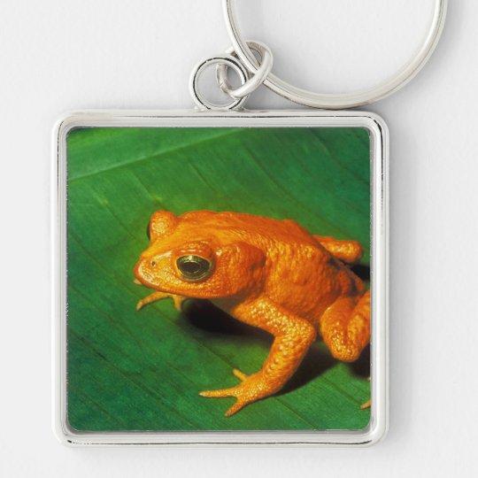 Golden Toad Keychain