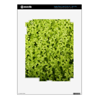 Golden Trailing Clubmoss iPad 3 (Wi-Fi/Wi-Fi + 4G Decal For iPad 3