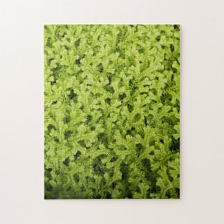 Golden Trailing Clubmoss Jigsaw Puzzle