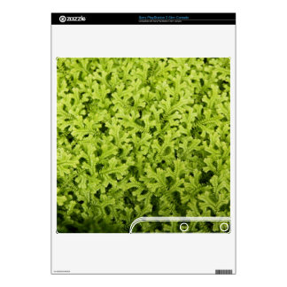 Golden Trailing Clubmoss Sony PlayStation 3 Skin