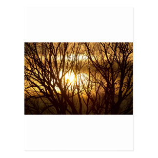 Golden Tree Dream Postcard