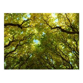 Golden Trees postcard