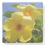 Golden Trumpet Flowers I Stone Coaster