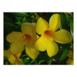 Golden Trumpet Flowers II Tropical Floral Photo Print