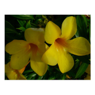 Golden Trumpet Flowers II Tropical Floral Postcard