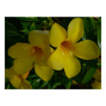 Golden Trumpet Flowers II Tropical Floral Poster