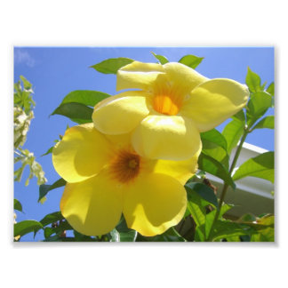Golden Trumpet Flowers Photo Print