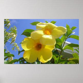 Golden Trumpet Flowers Print