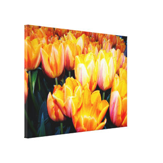 golden tulip flowers. stretched canvas print