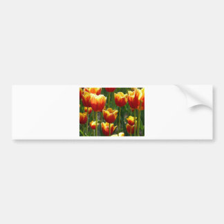 golden tulips bumper sticker