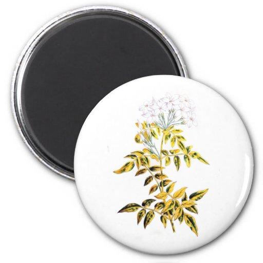 Golden Variegated Jasmine 2 Inch Round Magnet