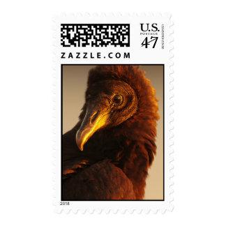 Golden Vulture Stamp
