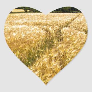 Golden wheat field in Brandenburg Heart Sticker